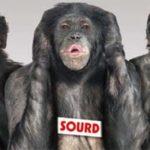 singes-aveugle-sourd-muet-slide.jpg